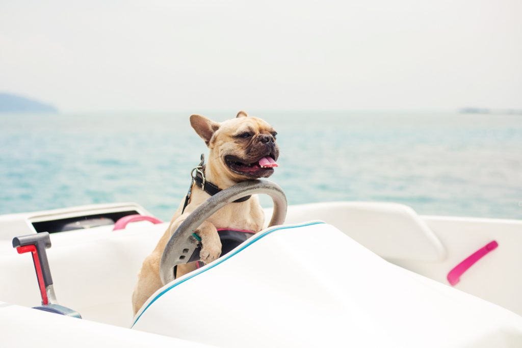 A dog on the deck of a boat at the wheel enjoying sailing