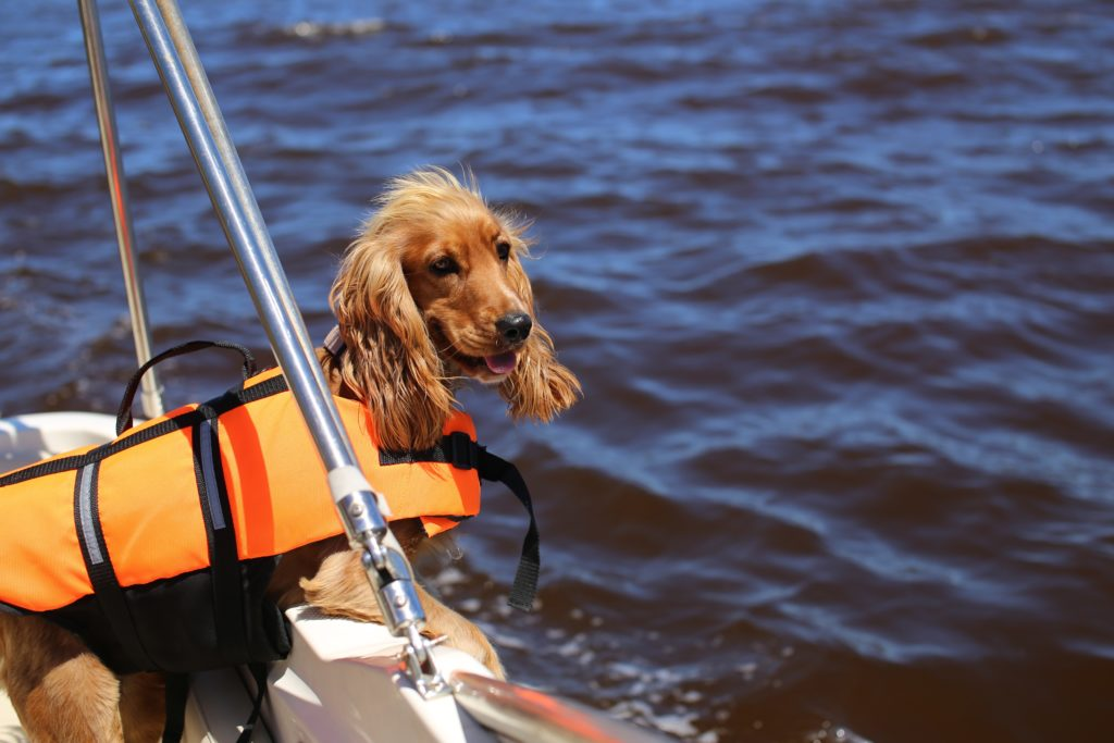 A dog wearing a lifejacket on the boat in the sea