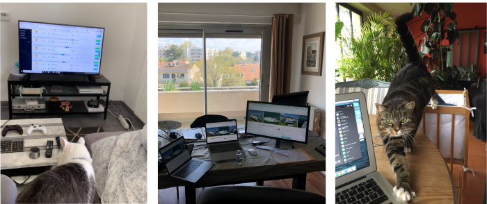Image of 3 different teleworking station at home with cats