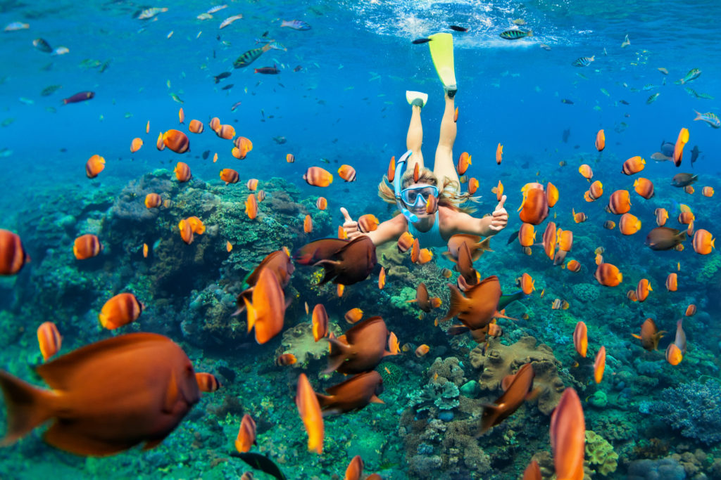 A view of a woman snorkelling surrounded by colourful fishes